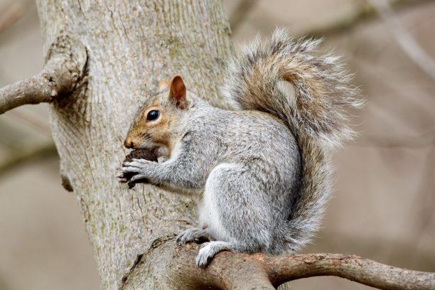 英語でリスはsquirrel