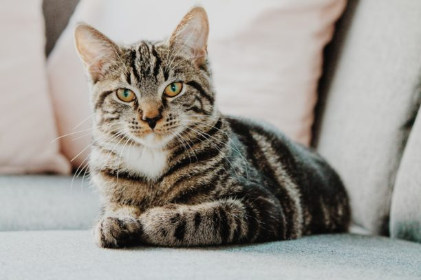 英語で猫はcat