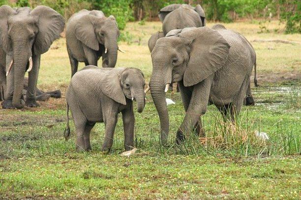英語で象はelephant