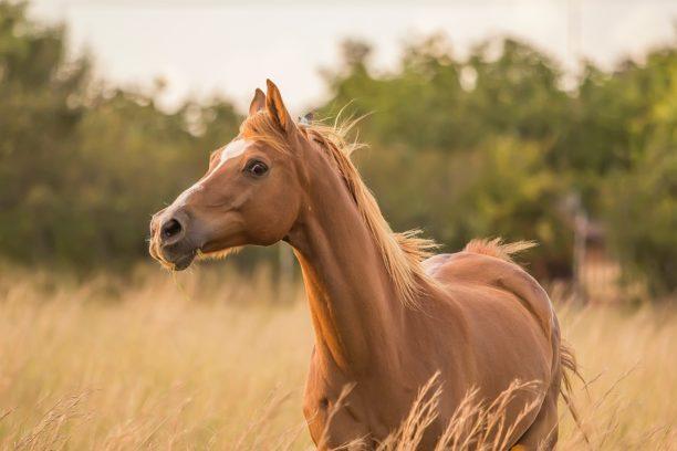 英語で馬はhorse