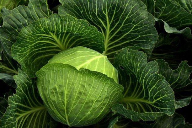 英語でキャベツはcabbage
