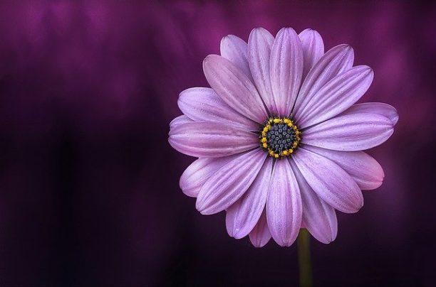 英語で紫色はpurple